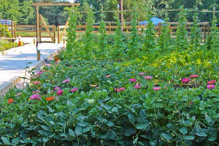 Bobby Lanier Farm Park Community Garden